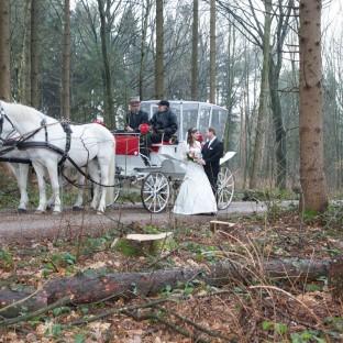 Pferdekutsche im Wald