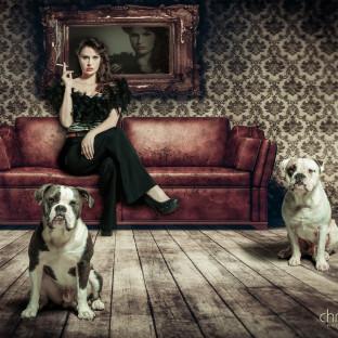 Bulldogge Fotoshooting Portrait Hamburg