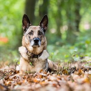 Hund auf Hochzeit im Wald